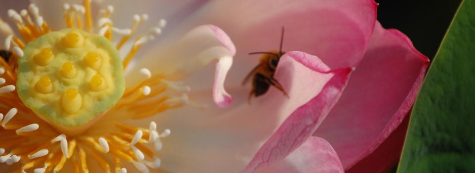 bee + flora symbiosis